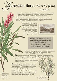 RHS Hampton Court Palace @RHS Flower Show Australian Flora Exhibition, July 2017
