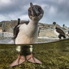 "National Geographic (@natgeo) on Instagram: ""Photograph by @paulnicklen taken while #onassignment with @cristinamittermeier, @ladzinski…"""