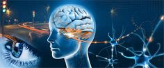 Investigadores franceses han desvelado el misterio de cómo el cerebro elabora la percepción visual de la velocidad en escenas naturales complejas, como el desplazamiento de una bandada de pájaros. Lo hace creando patrones espacio-temporales a partir de la información visual, obviando detalles (como la velocidad de cada ave) para ofrecer una percepción coherente de un conjunto disperso y no determinista.