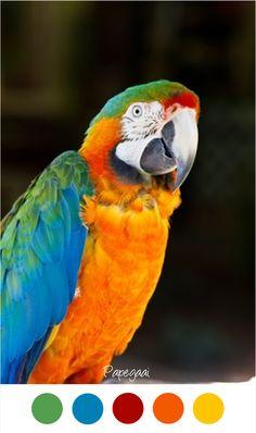 PAPEGAAI - Felle kleuren blauw, rood, geel, groen en oranje. Voor een vrolijke / kleurrijke kinderkamer.