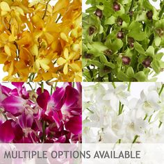 Orchids – Multiple Color Options - 70 Stems