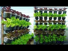 Garden Trees, Trees To Plant, Growing Lettuce, Growing Greens, Market Garden, Formal Gardens, Small Space Gardening, Hobby Farms, Diy Planters