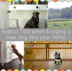 Bringing a new dog home? Take a look at these helpful tips for when you bring a new dog into your home: http://blog.homes.com/2013/07/helpful-tips-when-bringing-a-new-dog-into-your-home/