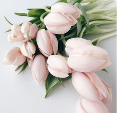 Ideas Flowers Tulips Bouquet Peonies For 2019 My Flower, Fresh Flowers, Beautiful Flowers, Exotic Flowers, Light Pink Flowers, Cactus Flower, Dried Flowers, Bloom, Deco Floral