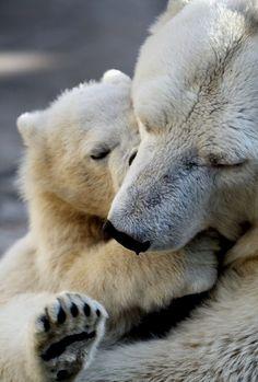Polar cuddles