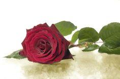 une #rose pour quelqu'un de spécial
