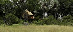#safari #botswana #okavango delta #kwetsani camp #travel