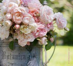 Rosas rosas...