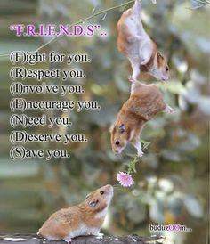 friends quotes cute friendship animals quote friend friendship quote friendship…