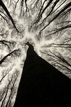"mirrormaskcamera: "" hauntedbystorytelling: "" Joanna Antosik :: Neurons II "" Source: """
