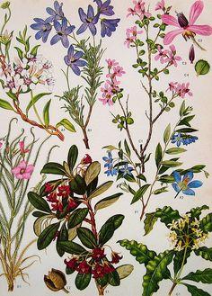 Vintage Flowers Prints 131 | Nina | Flickr