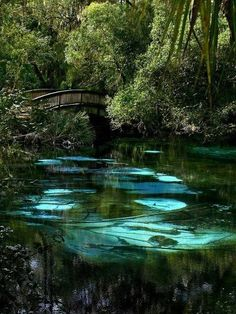 Turquoise Pool,Feru Hammock Spring,Savannah,Georgia.