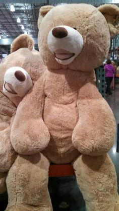 Huge teddy bears at Costco❤ you have no idea how much I want this