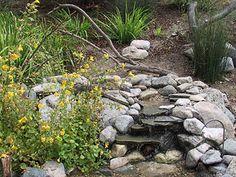 Birds in the Garden -- So. California
