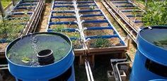 We are just getting started this year with aquaponics. Right away, the weakest link with aquaponics