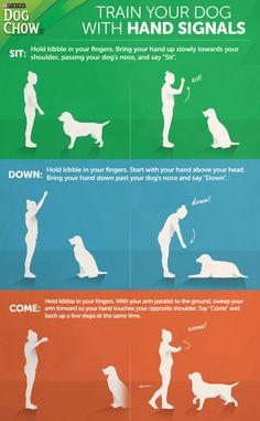 infographics on pinterest your dog infographics and new