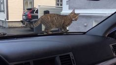 SUPER SMART CAT _ SHE EVEN KNOW MY CAR....and waiting me come out.-