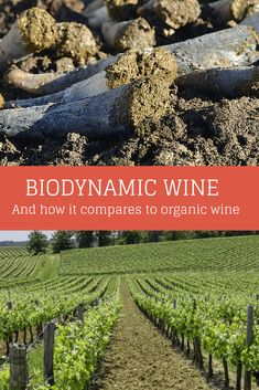 Biodynamic Wine and How It Compares to Organic Wine - Wine Turtle