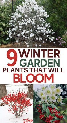 Outdoor Flowers, Outdoor Plants, Garden Plants, Outdoor Gardens, Winter Plants, Winter Flowers, Winter Garden, Garden Yard Ideas, Lawn And Garden