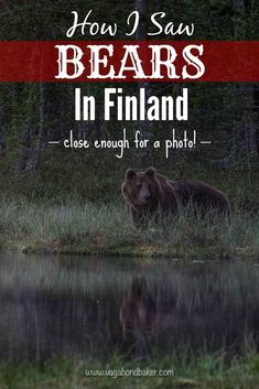 How I Saw Bears in Finland