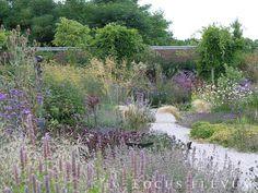 Gravel garden met planten houden van droogte. Tuin bij tuinontwerpbureau Locus Flevum in de Flevopolder