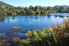 Te Waikoropupu Springs, Takaka, Golden Bay, New Zealand royalty-free stock photo Images Of Peace, Bay News, Water Sources, South Island, Image Now, New Zealand, National Parks, Scenery, Royalty Free Stock Photos