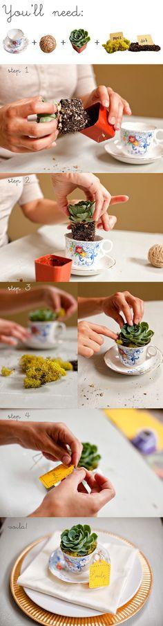 DIY Succulent Teacup Favors