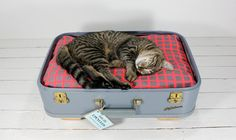 upcycled suitcase = pet bed