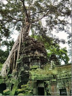 Visiting Angkor National Park in Cambodia - one of the most beautiful places in the world. Incredible photos!!!