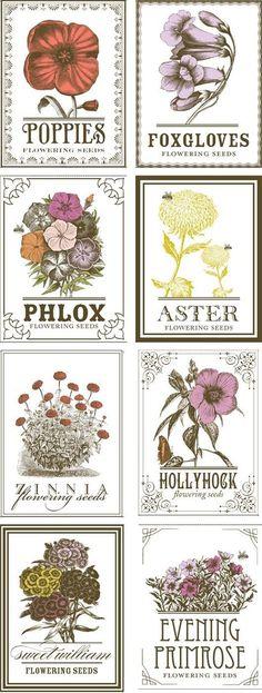 vintage seed labels Vintage Flower Prints, Vintage Floral, Vintage Flowers, Printable Garden Labels, Printable Wall Art, Printable Flower, Vintage Names, Vintage Art, Images Vintage