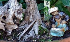 Bonsai Tree – Tuesday's Miniature Free Daily Jigsaw Puzzle