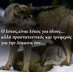 Wolf Quotes, Letters, Feelings, Words, Movie Posters, Movies, Quotes, Films, Film Poster