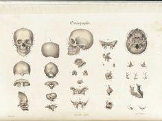 Sarlandière, Jean-Baptiste. Anatomie méthodique, ou Organographie humaine en tableaux synoptiques, avec figures. (Paris: Chez les libraires de médecine, et chez l'auteur, 1829).