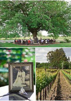 Big tree and wedding ceremony... neat