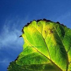 ''Autumn 1'' - ©  Vassilis Tagoudis
