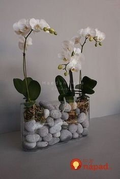 Phalaenopsis Orchid Care For Beginners (Easy Guide Indoor Orchids, Orchids Garden, Garden Plants, Indoor Plants, House Plants, Indoor Flowers, Orchid Terrarium, Orchid Planters, Exotic Flowers