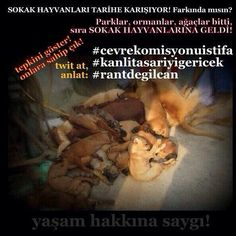 Turkish government wants to collect all stray animals for selling them to laboratories to do experiments on them. Please support the animals by sharing with hashtags (#rantdegilcan #kanlitasariyigericek)