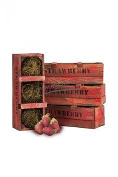 Strawberry kwekkist 3 vaks - Webshop - Regenton.nl