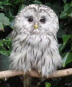 Owl looks worried.