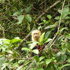 Costa Rica to see monkeys