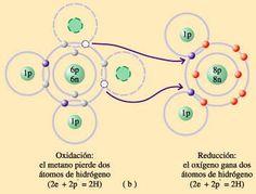 Reacción redoz en la fotosintesis