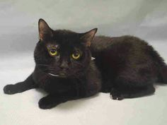 Please see friendly Nemo who is at ACC shelter Manhattan  and will be killed at noon tomorrow  for no reason..please help him .URGENT. visit pets on death row on Facebook URGENT  to get info to save him .adopt foster donate to a rescue.Dont let him die for nothing.