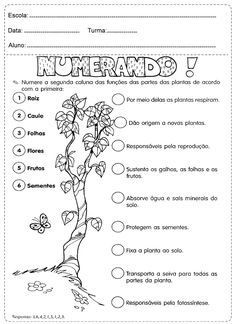 Fauna e Flora Science Worksheets, Science Activities, Science For Kids, Life Science, Primary School, Elementary Schools, Curriculum, Homeschool, Sistema Solar