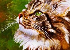 Maine Coon- This looks exactly like my previous cat. She was gorgeous!