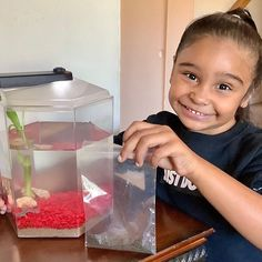 """Sofia Isabella on Instagram: """"Sofía was thrilled to receive her new African Dwarf Frog Pets from @froggyslair thanks to @kidstuff.pr - 🐸 These frogs are very low…"""" Dwarf Frogs, African, Homes, Pets, Instagram, Houses, Home, Computer Case, Animals And Pets"""
