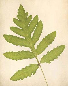 "Fern Art, Botanical Print """"Sensitive Fern"""""