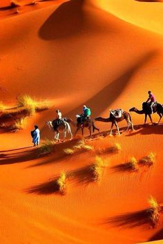 Namibia is the perfect travel destination for those who want to enjoy nature, exotic wildlife and spectacular sand dunes. Desert Dream, Desert Life, Wonderful Places, Beautiful Places, Beautiful Pictures, Photo Desert, Deserts Of The World, Amazing Nature, Belle Photo