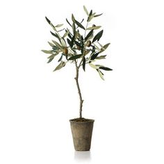 Faux French Market Olive Tree