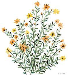 Orange Flowers (by Vikki Chu)