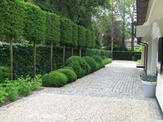 Fascinating Evergreen Pleached Trees for Outdoor Landscaping 57 - Haus und Garten - Back Gardens, Outdoor Gardens, Outdoor Trees, Casa Patio, Design Jardin, Outdoor Landscaping, Garden Spaces, Dream Garden, Land Scape